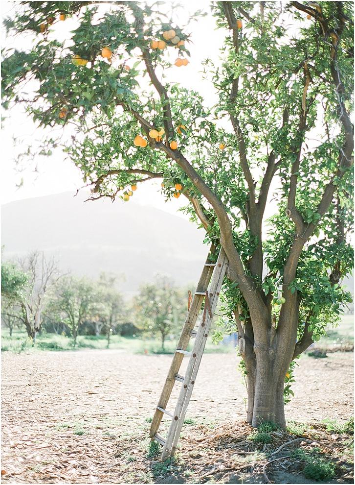 San Luis Obispo Wedding Ideas0005